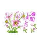野に咲く花のスタンプ♫(個別スタンプ:11)