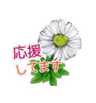 野に咲く花のスタンプ♫(個別スタンプ:33)