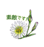野に咲く花のスタンプ♫(個別スタンプ:37)