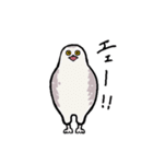 無難なトリさんのスタンプ-シロフクロウ編-(個別スタンプ:06)