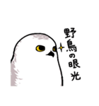 無難なトリさんのスタンプ-シロフクロウ編-(個別スタンプ:20)