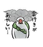 ふろしき文鳥 その三(個別スタンプ:04)