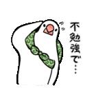 ふろしき文鳥 その三(個別スタンプ:23)