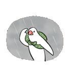 ふろしき文鳥 その三(個別スタンプ:31)