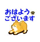 ちび秋田犬 でか文字敬語(個別スタンプ:1)