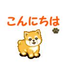 ちび秋田犬 でか文字敬語(個別スタンプ:2)