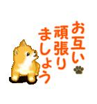 ちび秋田犬 でか文字敬語(個別スタンプ:31)