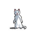 「瞬く」の白猫は見た(個別スタンプ:01)