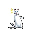 「瞬く」の白猫は見た(個別スタンプ:05)