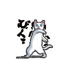 「瞬く」の白猫は見た(個別スタンプ:07)