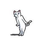 「瞬く」の白猫は見た(個別スタンプ:08)