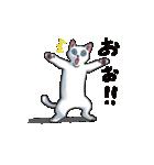 「瞬く」の白猫は見た(個別スタンプ:09)