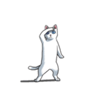 「瞬く」の白猫は見た(個別スタンプ:10)