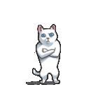 「瞬く」の白猫は見た(個別スタンプ:12)