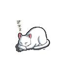 「瞬く」の白猫は見た(個別スタンプ:17)