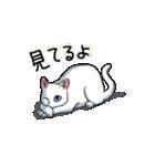 「瞬く」の白猫は見た(個別スタンプ:18)