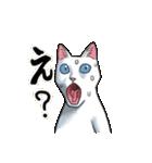 「瞬く」の白猫は見た(個別スタンプ:21)