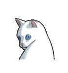 「瞬く」の白猫は見た(個別スタンプ:30)