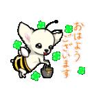 可愛いチワワの子犬(個別スタンプ:01)