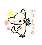 可愛いチワワの子犬(個別スタンプ:03)