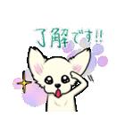 可愛いチワワの子犬(個別スタンプ:04)