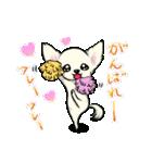 可愛いチワワの子犬(個別スタンプ:09)
