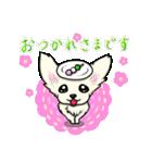 可愛いチワワの子犬(個別スタンプ:10)