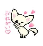 可愛いチワワの子犬(個別スタンプ:14)
