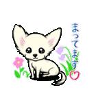 可愛いチワワの子犬(個別スタンプ:18)