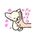 可愛いチワワの子犬(個別スタンプ:20)