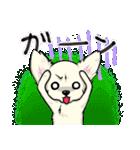 可愛いチワワの子犬(個別スタンプ:21)