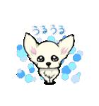 可愛いチワワの子犬(個別スタンプ:22)