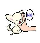 可愛いチワワの子犬(個別スタンプ:25)