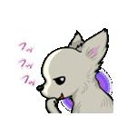 可愛いチワワの子犬(個別スタンプ:27)