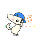 可愛いチワワの子犬(個別スタンプ:28)