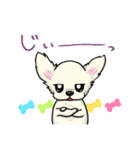 可愛いチワワの子犬(個別スタンプ:31)