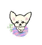 可愛いチワワの子犬(個別スタンプ:32)