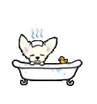 可愛いチワワの子犬(個別スタンプ:38)