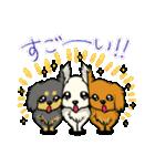 可愛いチワワの子犬(個別スタンプ:39)