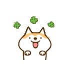 柴ちん6 柴犬のたくらみ(個別スタンプ:01)