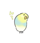 ゆるふわインコ(個別スタンプ:01)