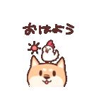 柴犬あんこ あいさつ編(個別スタンプ:01)