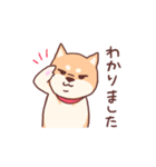 柴犬あんこ あいさつ編(個別スタンプ:07)