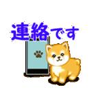ちび秋田犬 連絡(個別スタンプ:1)
