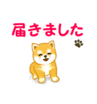 ちび秋田犬 連絡(個別スタンプ:8)