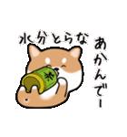 まる柴っちの夏(個別スタンプ:24)