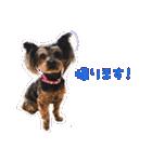 気ままにヨーキー Yorkshire terrier(個別スタンプ:02)