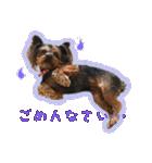 気ままにヨーキー Yorkshire terrier(個別スタンプ:04)