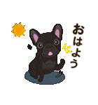 気軽にフレンチブルドッグ(ブリンドル)(個別スタンプ:01)
