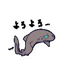いろんなサメ(個別スタンプ:37)